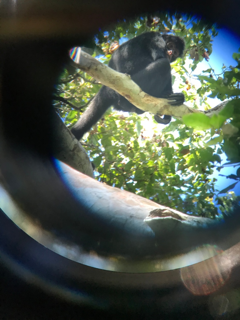 Spider Monkey through the view scope.